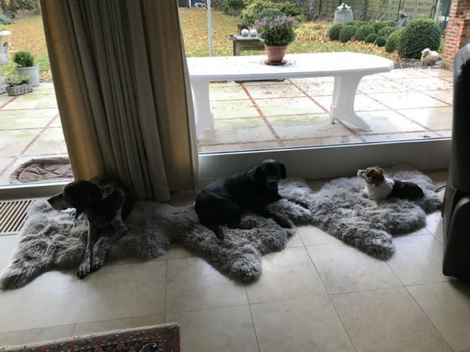schapenvacht voor honden